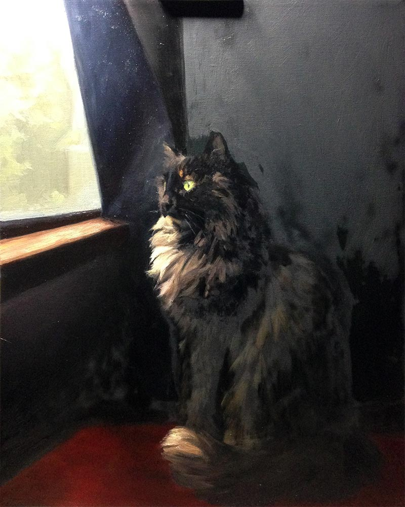 Winnie Cat Portrait Session 5